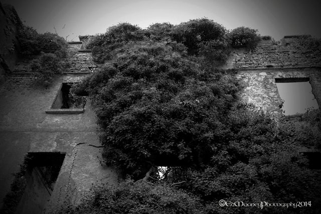 Donadea Castle (8)
